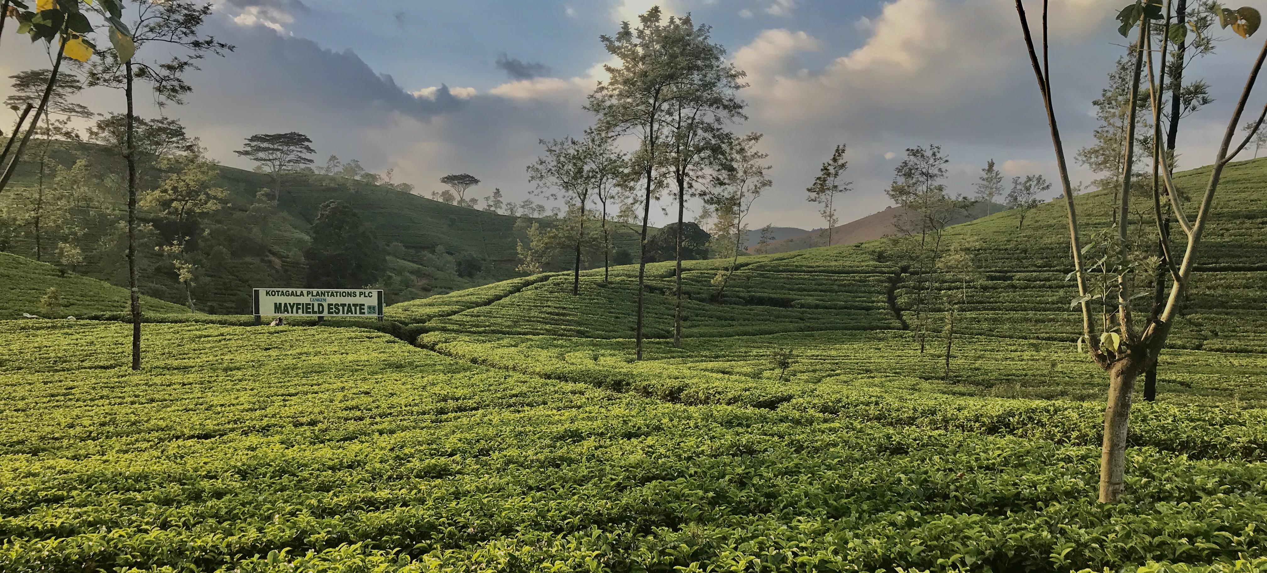 Srí lanka bez cestovky